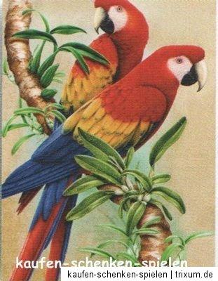 malen mit lpastellkreide papagei papageien miniformat. Black Bedroom Furniture Sets. Home Design Ideas